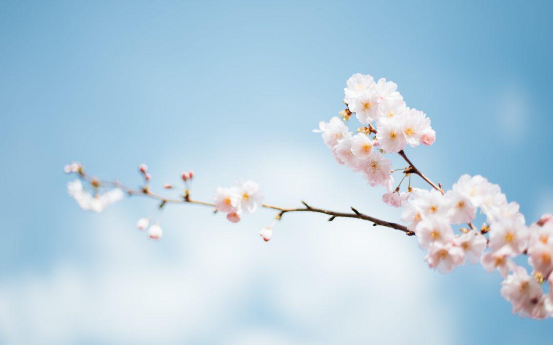 Tous nos conseils de pro pour réussir votre nettoyage de printemps, même en confinement !